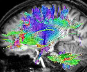 Abbildung 1: In Mikrofluidik- Kammern können Neuronen kultiviert und molekulare Vorgänge in ihrem Innern mit Fluoreszenz sichtbar gemacht werden (Foto: Max-Planck- Institut für Kognitionsund Neurowissenschaften, Leipzig / Alfred Anwander).